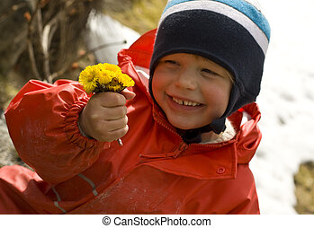 Smiling child proudly showing a bouquet of coltsfoot, one of...