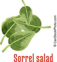 Fresh sorrel salad vegetable green leaves icon - Sorrel...