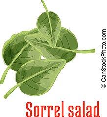 Fresh sorrel salad vegetable green leaves icon - Sorrel...