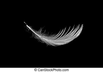 white feather on black - close up of white seagull feather...