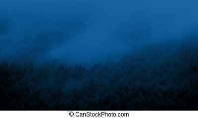 Mist Moves Over Forest At Night - Mist covering woods in the...