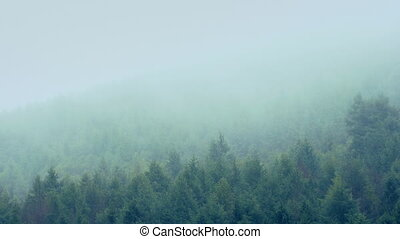 Mist Passing Over Mountain Trees - Forested mountainside...
