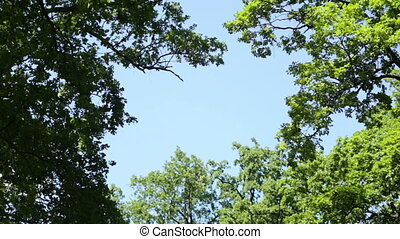 Video 1080p - Crowns of trees with bright afternoon sun and...