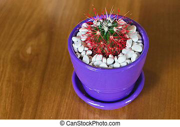 Beautiful cactus on a table