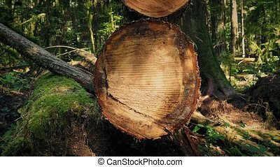 Moving Around Cut Log In Forest - Slowly rotating around a...