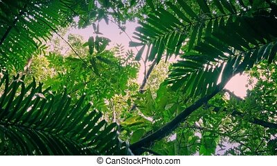 Moving Under Jungle Plants At Dawn - Gliding underneath...