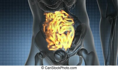 scan of human small intestine - science anatomy scan of...