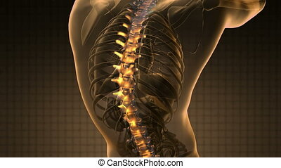 backbone backache science anatomy scan of human spine bones...