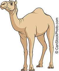 Color vector image of a camel. Isolated object on a white...