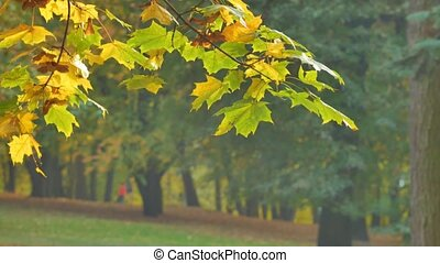 Autumn colorful bright branch tree with bright foliage on...
