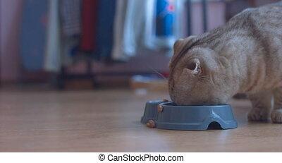 Cat eats food