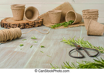 Rosemary for planting with garden tools on wooden table