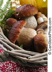 Fresh wild porcini mushrooms (boletus edulis) in wicked...