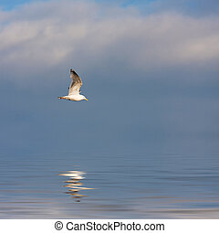 Seagull Flying - A large seagull flying over a blue sky with...
