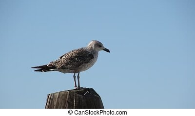 seagull rest at sea
