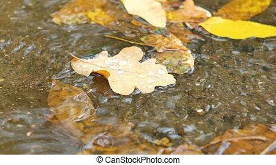 Closeup of maple leaves at the autumn drifting on water