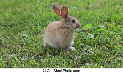 Little bunny rabbit sitting on the grass