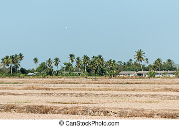 Paddy Field Off Season - View of a paddy field after harvest...