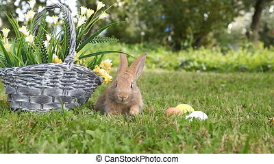 Little rabbit sitting in the basket - Cute rabbit sitting at...