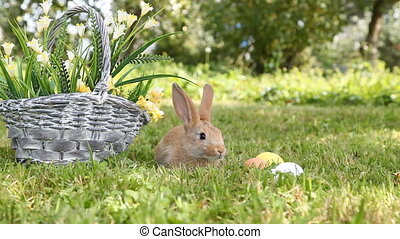Little rabbit sitting in the basket - Little rabbit sitting...
