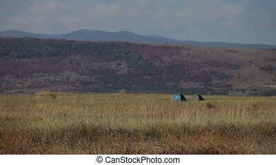 wind in dry grass on meadow - wind in dry grass on a...