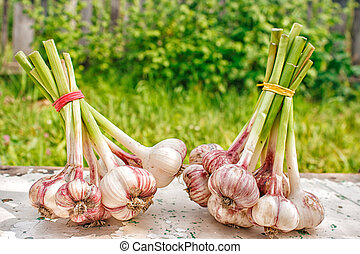 two bundles of garlic lying on the table