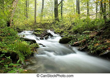 Forest stream on a misty autumn morning.
