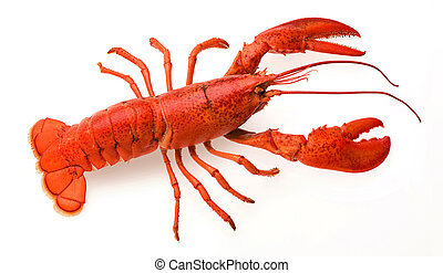 Lobster - a red lobster on a white background