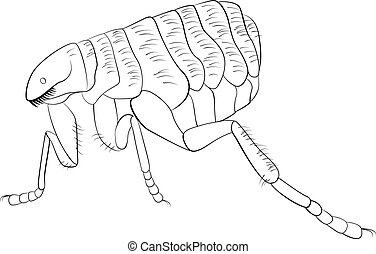 Black and white vector image of flea