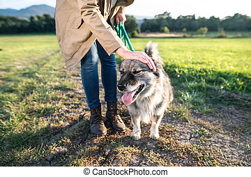 Unrecognizable young woman with dog in green sunny nature -...
