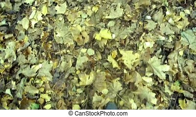 Fallen leaves - Walking across the blanket of fallen leaves