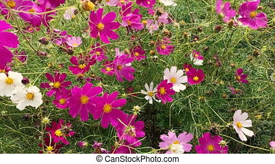 summer flowers swaying in the wind - Beautiful bright summer...