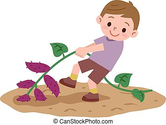 Boy to a sweet potato digging - Vector illustration.Original...