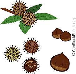 Set of chestnuts - Vector illustration.Original paintings...
