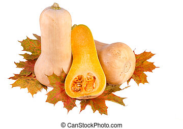 Butternut pumpkins with fall leaves isolated on white