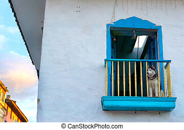 Dog on a Colonial Balcony - Dog sitting on a historic...