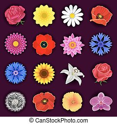 Big set of spring or summer flowers isolated