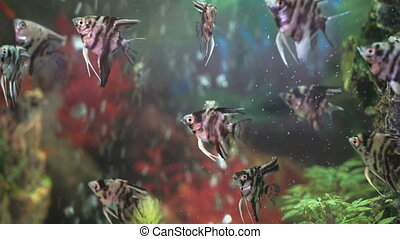 Small fishes swimming in the spacious aquarium - A lot of...