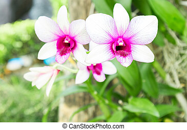 Sweet White pink orchid color flower, Nature and flower...