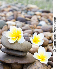 Plumeria flower on stone for spa relax