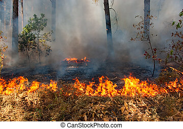 Forest fire - Big fire of trees in a wood with a smoke and a...