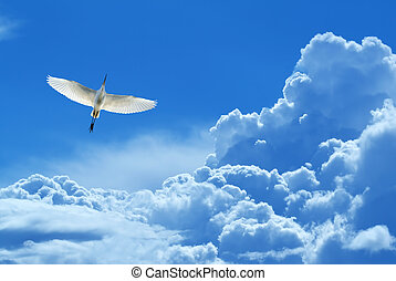 Beautiful tropical bird in flight against blue sky -...