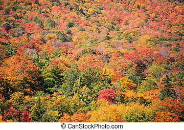 Fall foliage in Vermont - Fall foliage on Mount Mansfield...