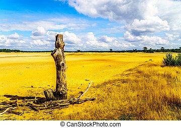 Dead Tree Stump in the Desert - Dead tree stump on the mini...