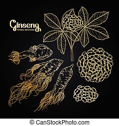 Graphic ginseng root and berries drawn in line art style....