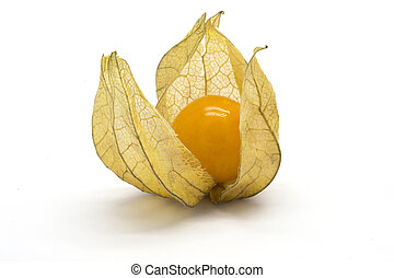 One physalis fruit (Physalis peruviana) on white isolated...