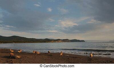 Zavoiko Bay in the Pacific Ocean. Kamchatka Peninsula in the...