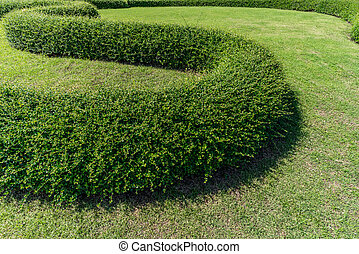 Green grass with trimmed bush