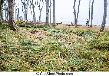 gespensterwald - wald