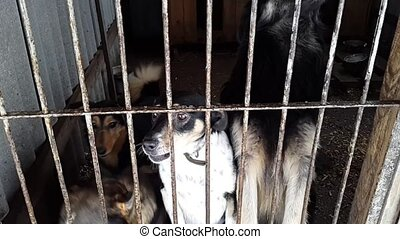 Stray dogs in the shelter in Ukraine